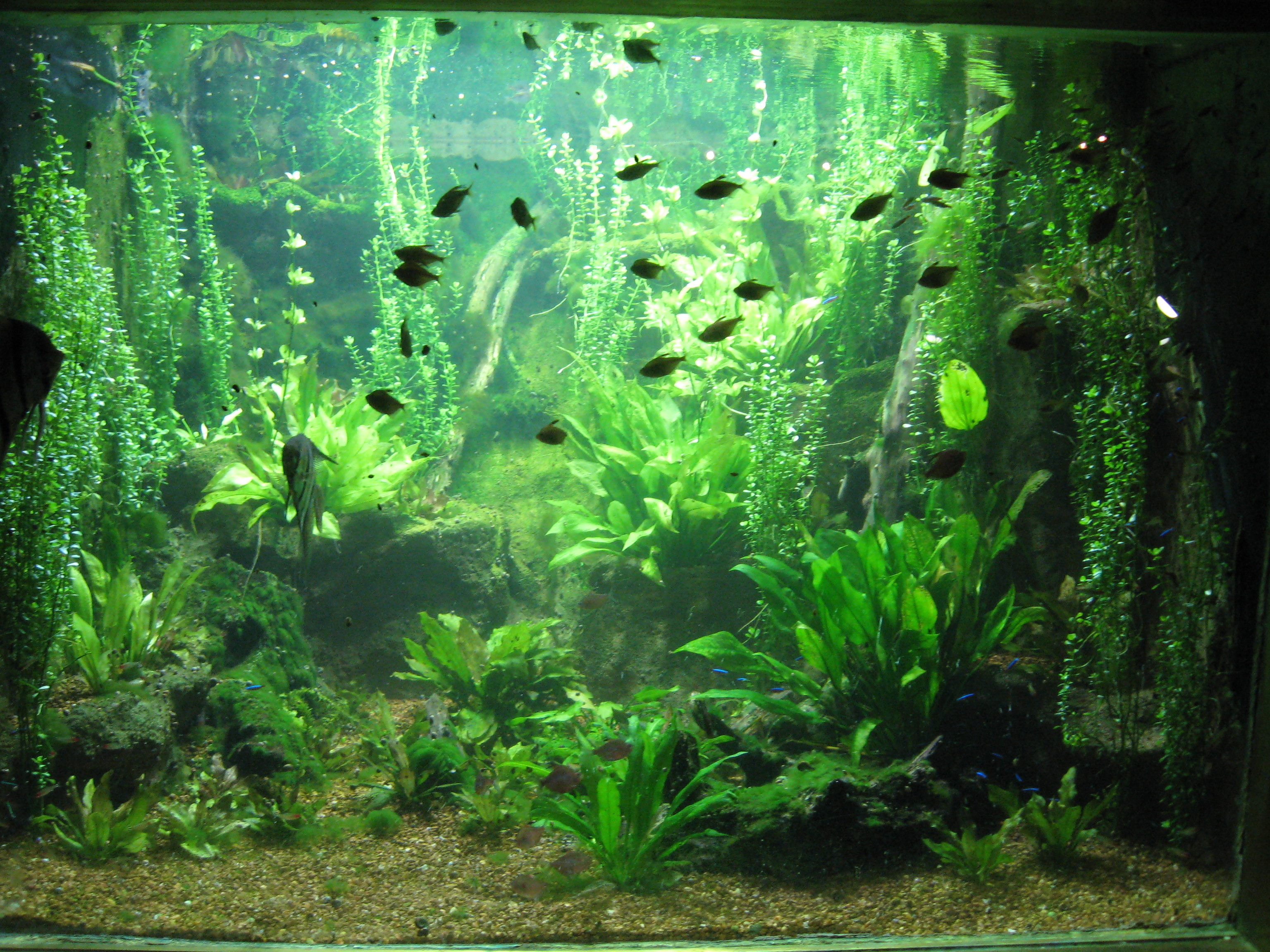 Freshwater aquarium fish buy - Your One Stop Shop For Discount Freshwater Fish Supplies